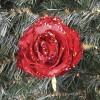 Rose, udsprunget m/clip-01