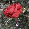 Roseudsprungetmclip-01